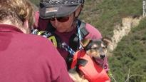 Rappelling officer rescues puppy from ravine