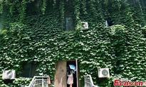 Climbing plant shields Nanjing University in summer