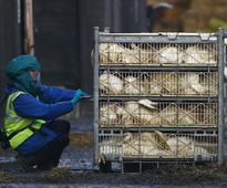 Bird flu detected in Daman; poultry items banned for a month