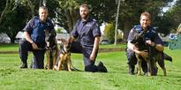 The Hugh Hefner of the police dog world and his heroic legacy