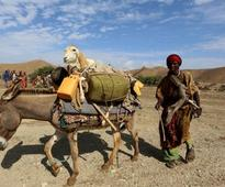 Somaliland: El-Nino wipes out livestock and crops as millions caught in grip of worst drought