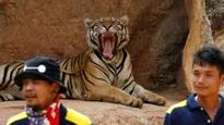 Officials seize tigers from Thai temple