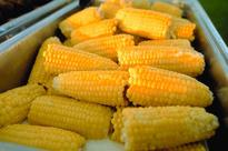 National Maize targets EGP 99mln profit in FY13