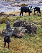 Madagascar cattle rustlers in deadly clashes