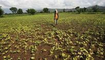 Madhya Pradesh farmers not getting minimum MSP, some mandis shut in protest