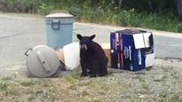 'I'm terrified': Northern Ontario town living in fear of bears