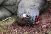South Africa receives equipment to combat illegal wildlife trafficking from US