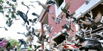 Beware of pigeon droppings!