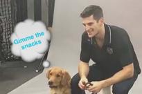 Los Angeles Kings have adorable Friday photoshoot with a bunch of very good dogs