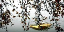 Chinar leaves hanging as Shikaras flatten their roofs in the Dal Lake