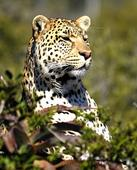 Leopard grabs boy, 5, at private nature reserve