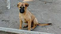 Mumbai: 3-month-old puppy flung from terrace in Chembur, dies