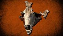 Bovine intervention: VHP to push for a cow ministry at the Centre