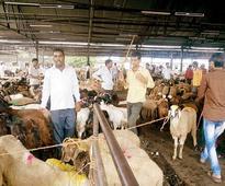 Mumbai: Deonar abattoir to get major facelift by BMC