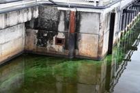Florida algae bloom afflicts economy, sea life