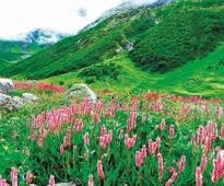 Mountains of Sanjeevani