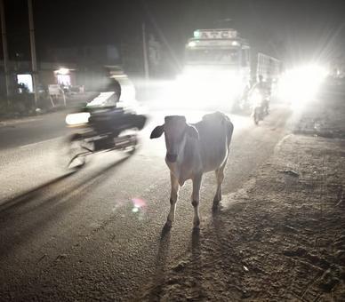 2 weeks after PM's anti-gaurakshak speech, man beaten up for carrying beef