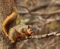 This is how squirrels organise their favourite nuts