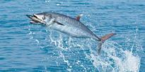 CMFRI's new mobile app to help fishermen