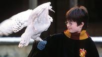 Every Magical Creature Ever Shown in a 'Harry Potter' Movie
