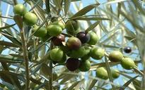 Rajasthan promotes progressive farming through live cultivation