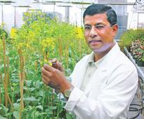 Rahman saved canola farmers in Canada