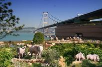And Now for Something Different: Noah's Ark in Hong Kong!