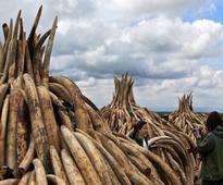 Kenya lights world's biggest ivory bonfire to save elephants