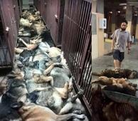 At Least 24 Bomb-Sniffing Dogs Massacred By An American Company In Kuwait