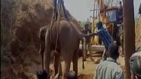 Watch: Elephant who fell into well in search of water, rescued