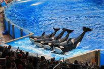 Orlando theme parks brace themselves for SeaWorld's new Antarctica attraction