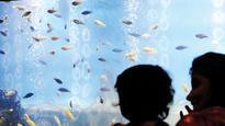 Mumbai's first fish park to open in Borivli