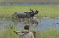 How Kaziranga rhinos are escaping the Assam floods