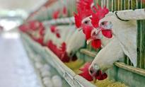 Govt to resolve poultry sector issues: Minister
