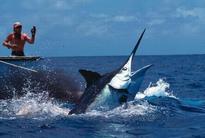 Cuba Hosts Biggest Hemingway Billfish Tournament Ever
