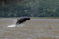Myanmar's 'smiling' dolphins face extinction