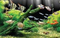 Action plan mooted to boost mariculture