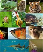 World Biodiversity Day May 22 to highlight extinction challenge
