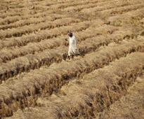 CAG picks holes in crop insurance schemes, raps govt for poor project rollout in 2011-16