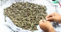 Excise seized 1200 kg of ganja in 2017, figures show