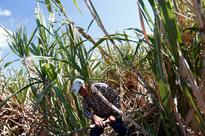 EXCLUSIVE: U.S., Mexico strike sugar deal ahead of NAFTA talks - sources