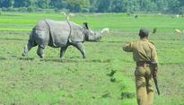Should forest guards be allowed to shoot poachers at sight? Experts are split