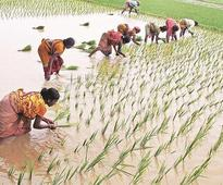 Budget 2018: Centre ready to take a hit over crop minimum support price