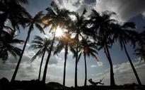 Under Parrikar, coconut palm may be reclassified as a tree in Goa