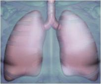 Dramatic Rise In Black Lung Disease In Queensland