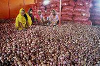 Government to purchase 15,000 tonnes of onions due to bumper crop