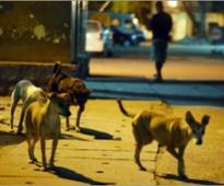 Street dogs save girl from molester