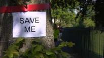 Tree felling 'national scandal' - Clegg