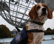 CBP Retires Beagle After 5 Years of Service