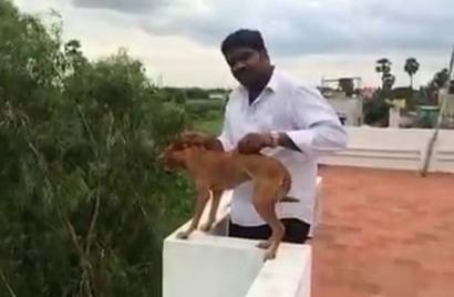 How Chennai identified the dog-thrower